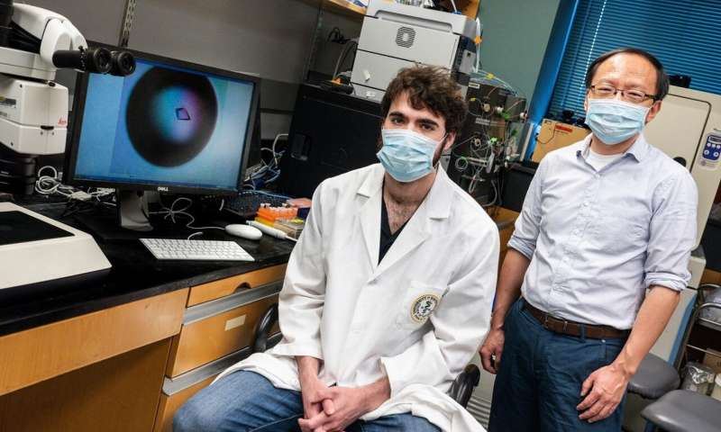 Study reveals strategy to create COVID-19 drugs to inhibit virus's entry and replication
