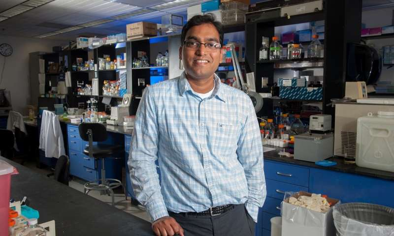 UMD paves the way for growing human organs for transplantation with new proof-of-concept