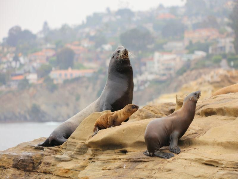 News Picture: Cancer Plagues California Sea Lions, With Implications for Humans