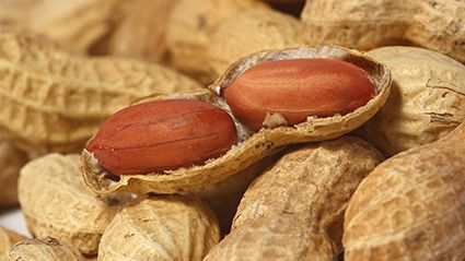 News Picture: Not Just Kids: Peanut Allergy Affects Many Adults